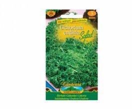 Štěrbák salát (Cichorium Endivia)